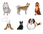 set breeds of dog