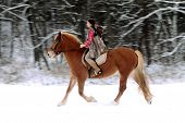 Woman Riding A Horse The Snow
