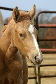 Foal Portrait poster