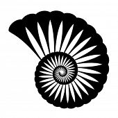 picture of fibonacci  - vector shell silhouette - JPG