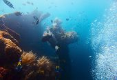 stock photo of bottomless  - Underwater shoot of USAT Liberty wreck - JPG