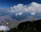 Green meadow with flowers and volcanoes on the background. Bromo Tengger Semeru National Park, Indon