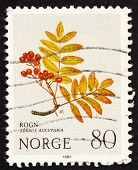 Postage stamp Norway 1980 European Rowan, Mountain Flower