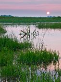stock photo of marshlands  - colorful sunset over fresh water marshland nature reserve - JPG