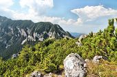 stock photo of mica  - Piatra Craiului National Park in Romania  - JPG