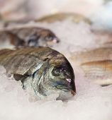 Fish on ice at the fishmongers