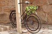 Iron Bicycle With Flower Arrangement
