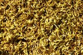 Yellow moss background
