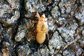 Insekt Häutung