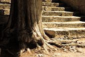 Tree And Flight Of Steps