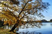 Talkin Tarn, Brampton, with overhanging tree