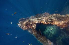 image of bottomless  - Underwater shoot of USAT Liberty wreck - JPG