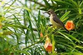 Female Beautiful Sunbird