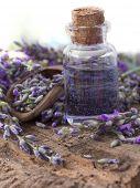 lavender spa