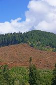 Clear Cut Logging Slope,