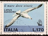 ITALY - CIRCA 1978: a stamp printed in Italy shows image of  Audouin's Gull (Ichthyaetus audouinii), Mediterranean and West Saharan coast species. Italy, circa 1978