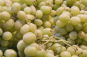 Seedless Green Grapes Closeup