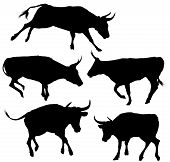 picture of wild donkey  - Collection of Bull Silhouette  - JPG