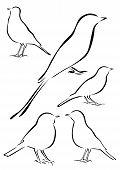 Birds Vector Illustrations In Brush Strokes
