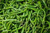 Background Of Green Chillies