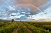 picture of dirt road  - Beautiful rainbow above a dirt road next to farms - JPG