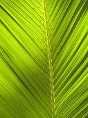 Green_Leaf_0801