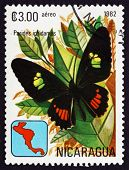 Postage Stamp Nicaragua 1982 Iphidamas Cattleheart, Butterfly
