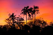 image of bird paradise  - sunset with birds at Bird island - JPG