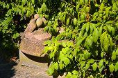 stone bird in the garden