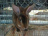 Rabbit In Animal Shelter