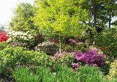 Dreamy Garden 2
