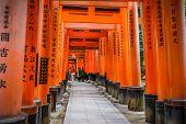 Torii gate at Fushimi Inari-taisha in Kyoto