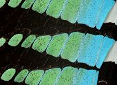Close Up Texture Of Common Bluebottle Butterfly Wings