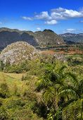 Cuba. Tropical nature of Vinales Valley.