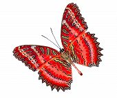 Greatest Red Lacewing Butterfly Lower Part Isolated On White Background