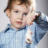 boy plays with mouse