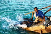 SOUTH ARI ATOLL, MALDIVES - DECEMBER 12 2013: Stingray feeding