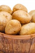 picture of potato-field  - Potatoes in basket close-up isolated on white background