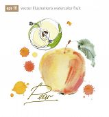 Vector Illustration Set Of  Watercolor Fruits