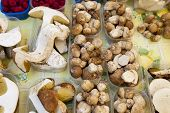 pic of porcini  - Fresh porcini and raspberries on market stall - JPG