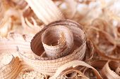 Wood shavings on sawdust closeup