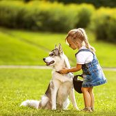 image of puppy dog face  - little girl in the park their home with a dog Husky - JPG