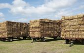 Trailers loaded with hay
