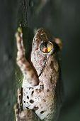 Ruhe-Frosch