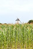 Windmill In Cornfield, France