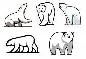 White polar bears set