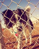 a dog out enjoying nature at a dog park toned with a retro vintage instagram filter
