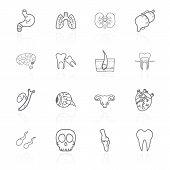 Vector Set Of Contour Icons Of Internal Human