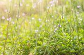 Wild Little Flower