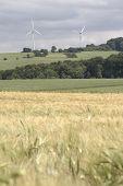 Cornfield With Windenergy - Portrait